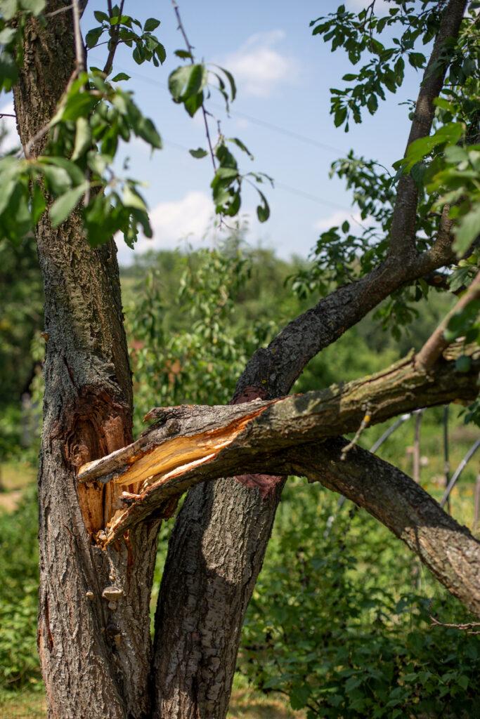 Tree Worx Fallen Tree Damage